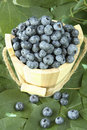 Miniature wooden piled high with ripe blueberries Royalty Free Stock Photography