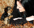 Miniature yorkie puppy a full blood with owner in the fall grass weather owner is smiling at Stock Photos