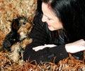 Miniature Yorkie Puppy Royalty Free Stock Photo