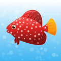 Miniatus Grouper fish