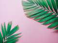 Minimal summer background concept with green palm leaf on pink p Royalty Free Stock Photo