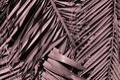 Minimal tropic concept. leaves of palma closeup Royalty Free Stock Photo
