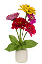 Minimalistic bouquet mini zinnia flowers number red and yellow in ceramic pot vase isolated Stock Photography
