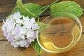 Mint чай Стоковая Фотография RF
