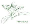 Mint branch outline VECTOR sketch
