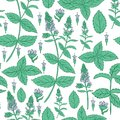 Mint leaf, blossom branch peppermint isolated on white background, Hand drawn vector seamless floral pattern, spicy herb Royalty Free Stock Photo