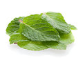 Mint leaf heap Royalty Free Stock Photos