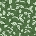 Mint leaf peppermint isolated on green background, Hand drawn vector seamless floral pattern, spicy herb kitchen texture Royalty Free Stock Photo