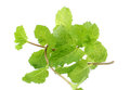 Mint leaves over white backgrund Stock Image