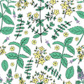 Mint leaves, peppermint bud, Hypericum, Tutsan herbs on white background, Hand drawn vector seamless floral