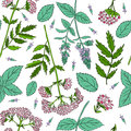 Mint leaves, peppermint buds, Valeriana officinalis on white background, Hand drawn vector seamless floral
