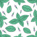 Mint leaves, peppermint buds on white background, Hand drawn vector seamless patterns, spicy herbs, kitchen
