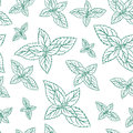 Mint leaves, peppermint isolated on white background, Hand drawn vector seamless patterns, spicy herbs, kitchen texture