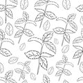 Mint leaves, peppermint on white background, Hand drawn vector seamless patterns, spicy herbs, kitchen texture
