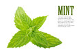 Mint leaves two fresh green isolated over white background Royalty Free Stock Images