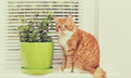 Mint plant and cat Royalty Free Stock Photo