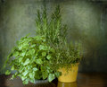 Mint thyme and rosemary garden herbs to spice up the cuisine Stock Photo