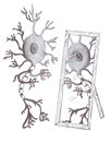 Mirror neuron Royalty Free Stock Images