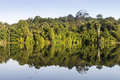 Mirror reflection of flora and trees on still water Royalty Free Stock Photo