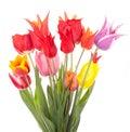 Miscela dei tulipani Immagine Stock Libera da Diritti