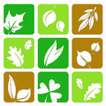 Miscellaneous green and brown summer leaves silhouettes icons in a table Stock Image