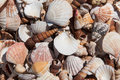 Miscellaneous sea shells mixed close up Stock Images