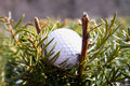 Misplaced Golfball Royalty Free Stock Photo