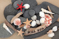 Miss you sea shell driftwood and pebbles on a sand beach with sign Royalty Free Stock Image