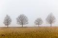 Mist Four Trees Landscape Stock Images