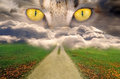 Misterious eyes yellow feline watching your path Stock Photography