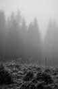 Mistery fog walk in nature on romania mountains Royalty Free Stock Photography