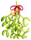 Mistletoe  Watercolor Royalty Free Stock Photo