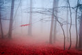 The misty autumn forest. Shallow depth of field Royalty Free Stock Photo