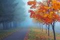 Neblig Herbst