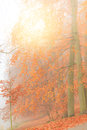 Misty autumn park in foggy day on autumnal scenery beauty landscape fall trees and leaves Royalty Free Stock Photo