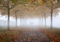 Misty autumn scene couple walking on sidewalk with golden trees in a foggy morning Stock Images