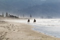 Misty beach horses in the new zealand Royalty Free Stock Images