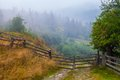 Misty Beech Forest On The Moun...