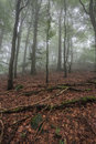 Misty beginning of the autumn in the forest Royalty Free Stock Photo