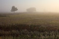 Misty dawn early morning nature grassland landscape Royalty Free Stock Photo