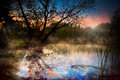 Misty dawn over Lake Forest Stock Images