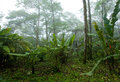 Misty, Dense, Lush Tropical Rain Forest in Costa Rica Royalty Free Stock Photo