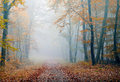 Misty forest atmosphere in the during the fall season Royalty Free Stock Image