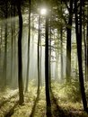 Misty forest with early morning sun rays Stock Image