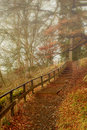 Misty forest footpath through a on a autumn day Royalty Free Stock Photos