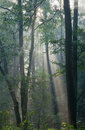 Misty forest at morning Royalty Free Stock Images