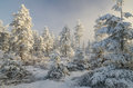 Misty winter forest Royalty Free Stock Photo