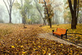 Misty morning in a autumn park fallen leaves Stock Photography