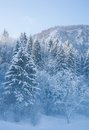 Misty morning in the snow covered mountain forest near bohinj slovenia Royalty Free Stock Photos