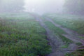 Misty morning in spring forest with a footpath and grass Royalty Free Stock Photo